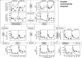 Kiwifruit Soluble Enzyme Activities Associated With Suc To
