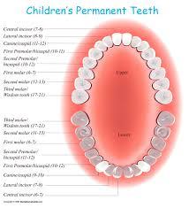 2 Year Old Teeth Chart Permanent Tooth Eruption In Children Kids Dental Online