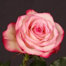 Image result for foto rosa