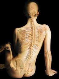 The Bodys Bones And Muscles Healthy Living Center