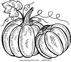 pumpkin drawing. doodle pumpkins. hand drawn ink illustration pumpkin drawing