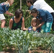 Michelle Obama Kitchen Garden Michelle Obama Hosts Chefs Harvests From White House Garden