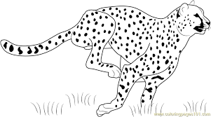 Cheetah Running Coloring Page Free Cheetah Coloring Pages