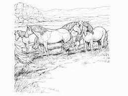 Kleurplaten Van Paarden Afdrukken