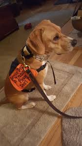 Service Assistance Dogs Don t pet them when they are working.
