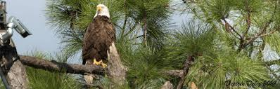 pritchett eagle cam. Exellent Eagle On Pritchett Eagle Cam H