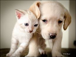 cute puppy and kitten best friends. To Cute Puppy And Kitten Best Friends