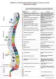 Medical Colour Diagnosis Spine Chart Chart Of The Nervous