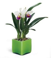 Office Flower Home And Office Plants In Chicago Crystal Flower Shop