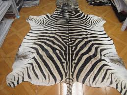 real zebra rug home design inspiration ideas and pictures