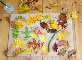 A Collage Picture Lovely Autumn Leaf Collage the Imagination Tree