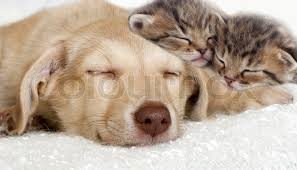 cute kittens and puppies together. Unique Cute In Cute Kittens And Puppies Together