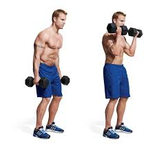 Biceps Exercise Chart The 15 Best Bicep Workouts And Exercises Of All Time