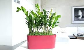 office plants no light. Office Plant Light Best Plants For Good Fluorescent Small No