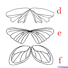 Fairy Wings Drawing At Getdrawings Com Free For Personal Use Fairy