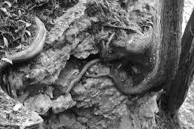 Root texture | Visual Afflatus