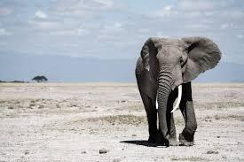 elephant symbolism dreams and