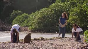 The Human <b>Spark</b> | So Human, So Chimp | <b>Monkey</b> Business | PBS