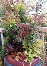 Small Picture Pieris Winter Container Garden 600x800 Sublime Garden Design