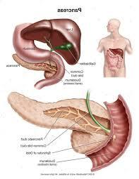 overleven zonder pancreas