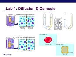 write my cheap university essay on trump college graduate resume ap bio diffusion and osmosis essay