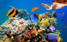 colorful coral reef wallpaper. HD Wallpaper Background Image For Colorful Coral Reef