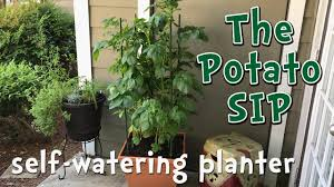 self watering potato container garden diy modified sub irrigated planter
