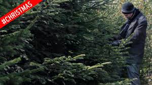 When Do You Remove Christmas Decorations  Home Decorating What Day Do You Take Your Christmas Tree Down On