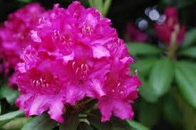 Best 25 Climbing Hydrangea Ideas On Pinterest  Vines Hydrangea Climbing Plants That Like Shade