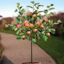 66 Best Fruit Images On Pinterest  Landscaping Vegetable Garden When Do You Plant Fruit Trees