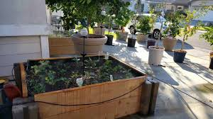 raised garden beds in driveway on concrete urban living