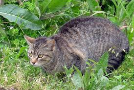 as much as we may adore cats stray and feral felines can be detrimental to your yard if they make a habit of visiting and staying