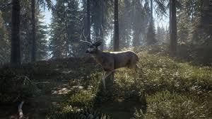 Blacktail Deer Thehunter Cotw Wiki Fandom