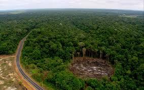 amazon rainforest.  Rainforest FAQu0027S About The Amazon Rainforest Worldu0027s Lung With Short Answers To Rainforest
