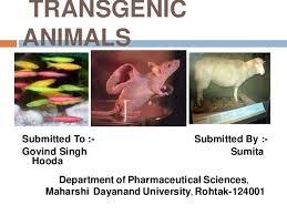 Transgenic Animals Transgenic Animal