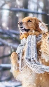 dog cute s snow winter 4k vertical