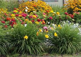Small Picture Drought tolerant garden design ideas