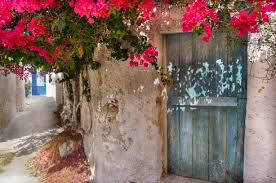 greek island red flowers bougainville old village street old house old door
