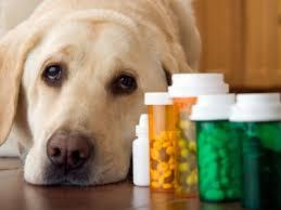 how pet meds for traveling works