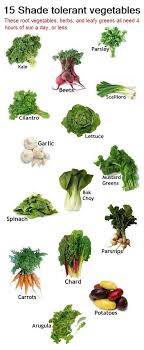 Vegetable Sunlight Requirement Chart 100 Expert Gardening Tips Ideas And Projects That Every
