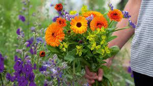 how to start a cut flower garden from
