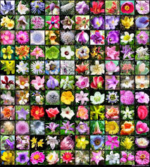 types of flowers with names. 100+ [ name types of flowers ] | flower names sweet throughout list with