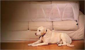 How to Keep Dog f Couch 7 Easy Ways that Actually Work