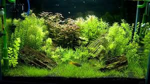best rimless fish tanks in 2021