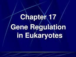 ppt chapter 17 gene regulation in