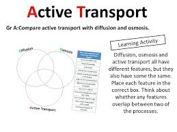 Venn Diagram For Osmosis And Diffusion Diffusion Osmosis And Active Transport Diagram Co Worksheet Answers