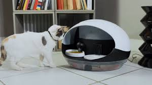 The Idiot's Manual to Cat Food Dispenser