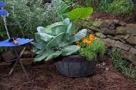 plant cabbage in a container along with flowers and herbs