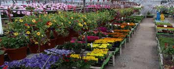 hewitts spring flowers