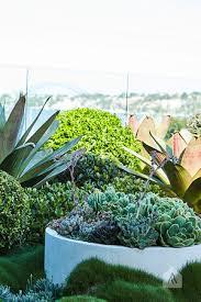 Small Picture Rooftop Balcony Garden Drummoyne Adam Robinson Design